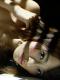 染谷有香「ふしだらな肢体」<ブルーレイ> / DVD サンプル画像8